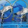 Шоу «Дельфины Северной Столицы»