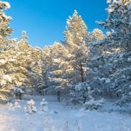 Всероссийский День снега в рамках «Лыжных стрел» 2018 фотографии