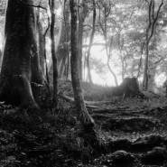 Выставка «Загадки острова Чеджу» фотографии