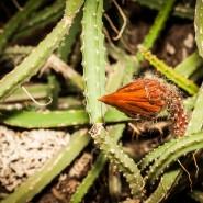 Экскурсия «Битва цариц» в Ботаническом саду 2017 фотографии