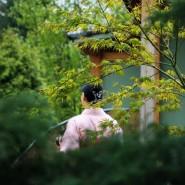 Фестиваль «Сакура Мацури» 2017 фотографии