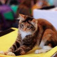 Выставка «Мир кошек» 2016 фотографии