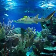 Выставка рыбок-петушков в Океанариуме фотографии