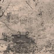 Выставка «Серебряная осень старого Петергофа» фотографии