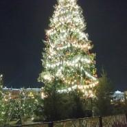 Новогодняя Ёлка на Дворцовой площади 2021 фотографии