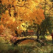 Выставка «Осенний вальс» фотографии
