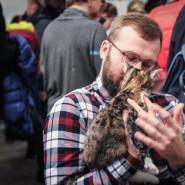 Выставка-раздача кошек «Новогоднее чудо» фотографии