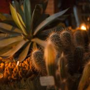 День студента в Ботаническом саду 2017 фотографии
