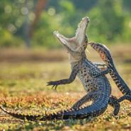 Фестиваль дикой природы  «Золотая черепаха» 2018 фотографии
