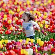 IV Фестиваль тюльпанов на Елагином острове фотографии