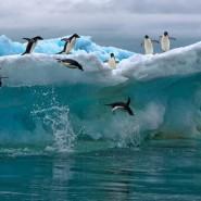 Выставка «Норвегия — Россия: сила притяжения — Арктика» фотографии