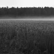 Выставка «Россия. Реализм. XXI век» фотографии