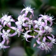 Праздник «Сад чудес» 2016 фотографии