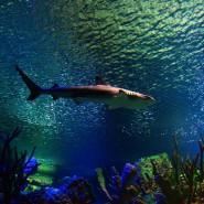 Осень в Океанариуме 2021 фотографии