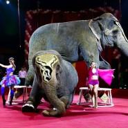 Цирк-шапито «Розовый Слон» фотографии