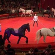 Большой Санкт-Петербургский Государственный цирк фотографии