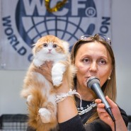 Международная выставка-продажа кошек «В гостях у Саффи» фотографии