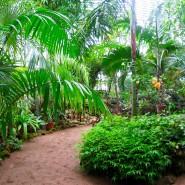 День победы в Ботаническом саду 2017 фотографии