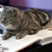 Музей «Республика кошек»  фотографии