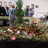 Выставка «Планета грибов» фотографии