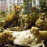 Зоологический музей Российской академии наук фотографии
