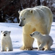 «День белого медведя» в Этнографическом музее фотографии