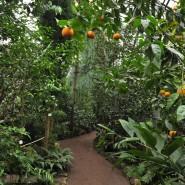 День всех влюбленных в Ботаническом саду 2017 фотографии