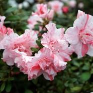 День влюблённых в Ботаническом саду 2018 фотографии