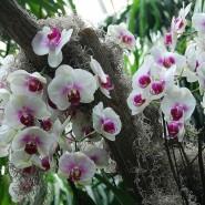 Выставка орхидей в Ленинградском Зоопарке фотографии