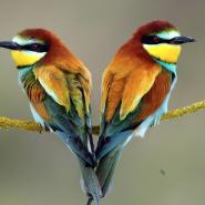 Выставка птиц «Птички в рукавичке» 2016 фотографии