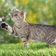 Public talk о кошках «От умиления до осознанности: как понять свою кошку?» фотографии