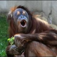 Международный день обезьян в Ленинградском зоопарке 2017 фотографии
