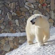 День белого медведя в Ленинградском зоопарке 2021 фотографии