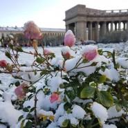 Топ -10 интересных событий в Санкт-Петербурге на выходные 28 и 29 ноября 2020 фотографии