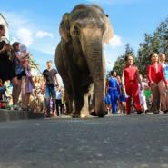 Международный фестиваль циркового искусства «На Фонтанке» 2018 фотографии
