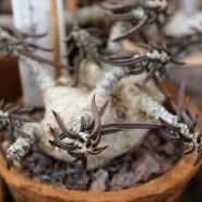 Выставка «Мадагаскар: уникумы растительного мира» фотографии