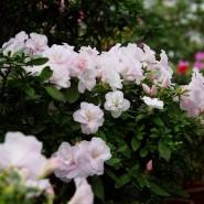 Сад Света. Романтическое свидание фотографии
