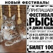 Фестиваль «Рысь и дикие кошки» фотографии