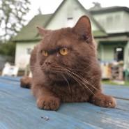 День бездомных животных в Музее кошки 2018 фотографии