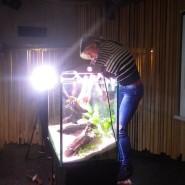 Вставка карпозубых рыб и биотопных аквариумов 2017 фотографии
