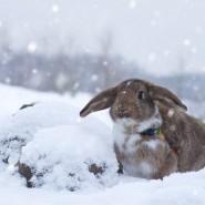 Фестиваль-выставка «Декоративные Кролики» фотографии