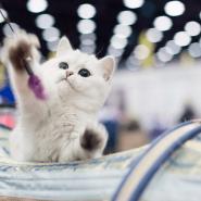 Выставка «Мир кошек- 2021» фотографии