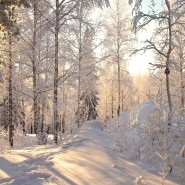 Топ-15 интересных событий в Санкт-Петербурге на выходные 30 и 31 января 2021 фотографии