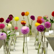 Выставка «Краски лета: гладиолусы и георгины» фотографии