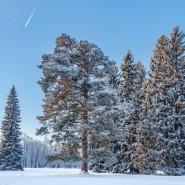 Новогодний проект «Зимний сказочный сад» в музее-заповеднике «Павловск» 2018/19 фотографии