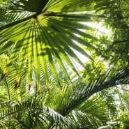 Экскурсия «Тропический маршрут» фотографии