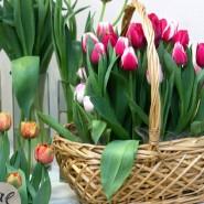 Выставка тюльпанов «Мечты о весне: путешествие в Голландию» фотографии