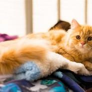 Фотовыставка «Котоостровок» фотографии