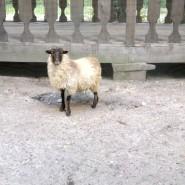 Контактный зоопарк «Радуга» фотографии