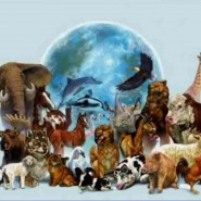 «День Земли» в Ленинградском зоопарке фотографии